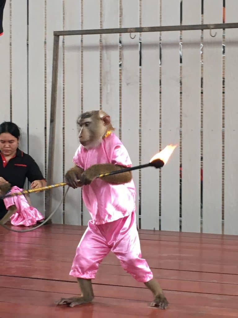 Elephant Camp - Monkey Show