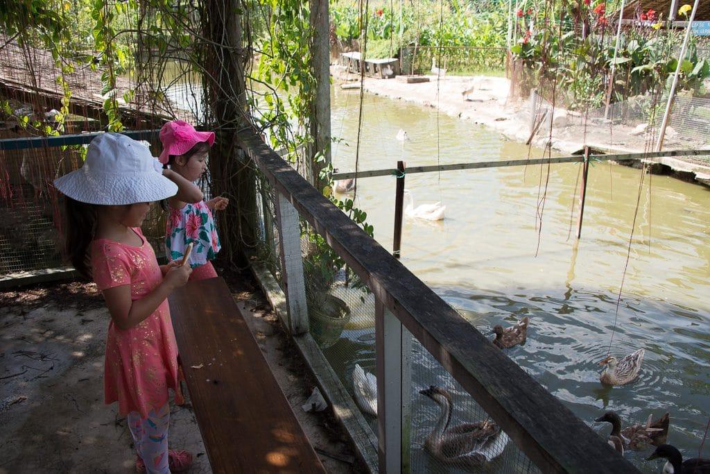 浮羅山背 (Balik Pulau)  - 夢田農場