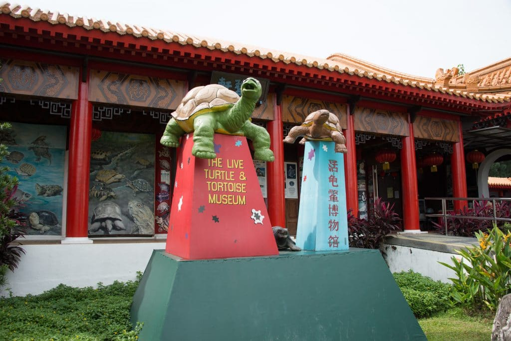 The Live Turtle AND Tortoise Museum