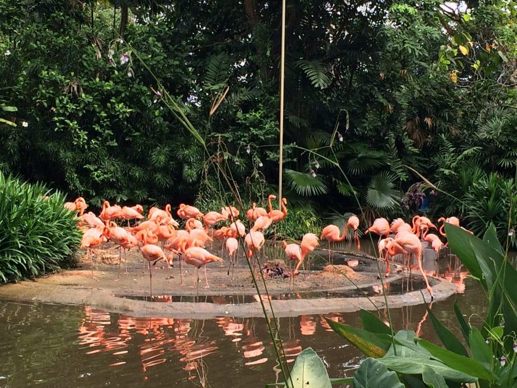 Jurong Birds Park